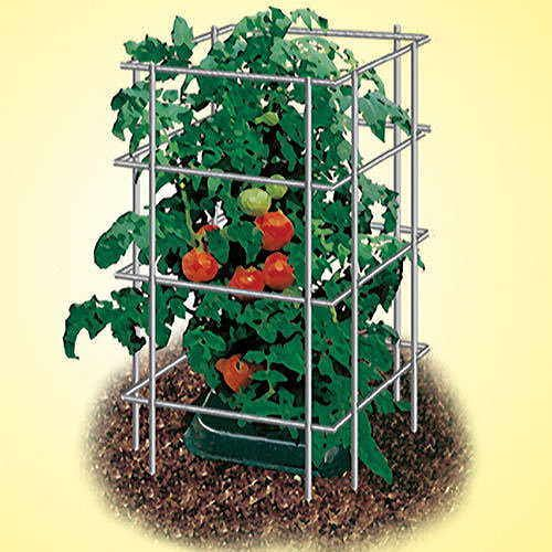 39 inch Park's Wire Tomato Pen - Pack of 3