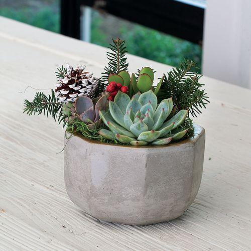 Succulent Garden in Concrete Container