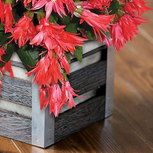 Christmas Cactus Crate