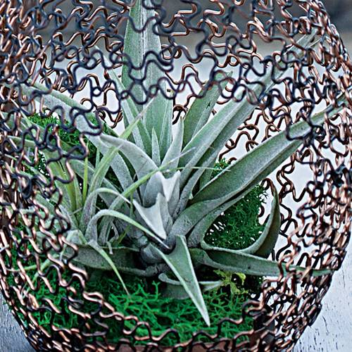Succulents in Decorative Teardrop
