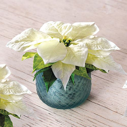 White Christmas Poinsettia Votives