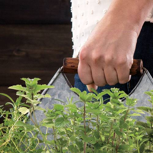 Chef's Companion Herb Caddy
