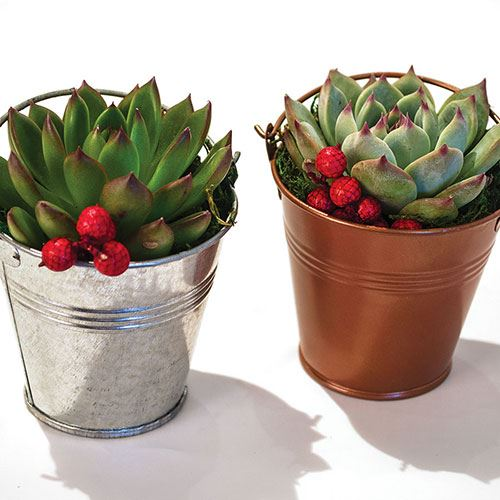 Metallic Succulent Gift - Set of 2