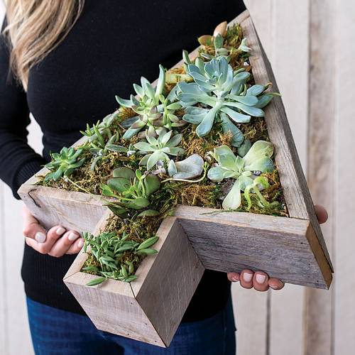 Succulents & Terrariums