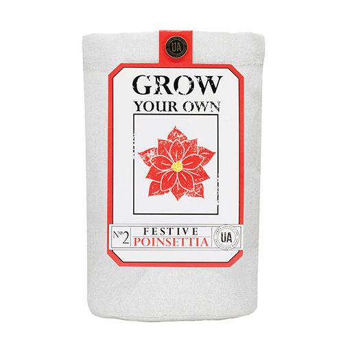 Poinsettia Grow Bag Kit