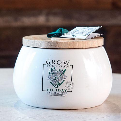 Grow Your Own Paperwhite Kit