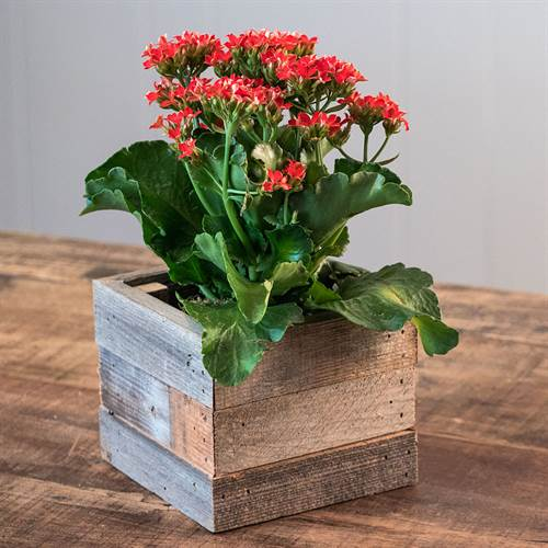 Kalanchoe in Reclaimed Wood