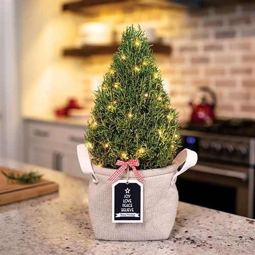 Cozy Rosemary Tree