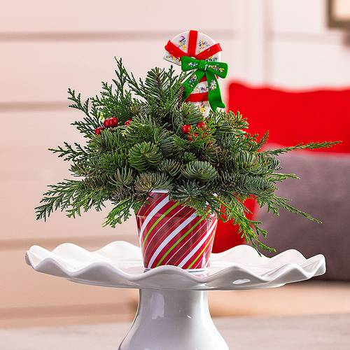 Sweet Treat Evergreen Centerpiece