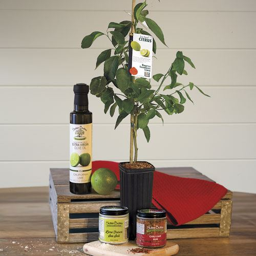 Luscious Lime Lovers Tree Gift Set