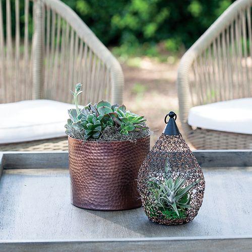 Succulent Garden in Antique Copper Pot