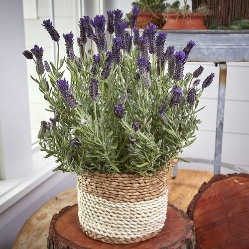 Nature's Perfume Lavender Gift Basket