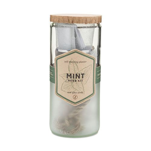 Eco-Planter - Mint