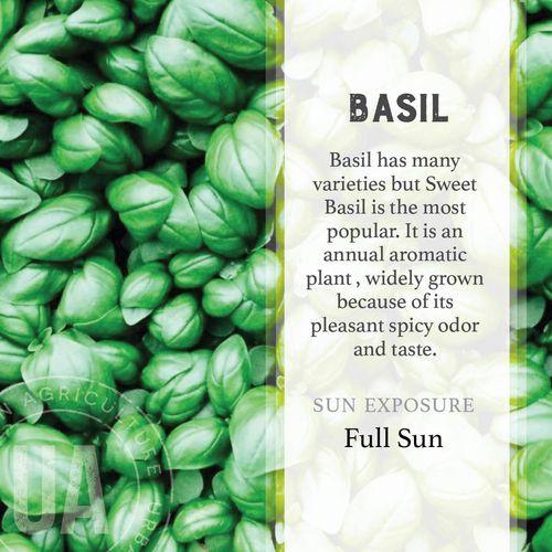 Basil Herb Garden Grow Kit