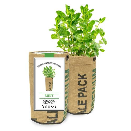Mint herb Garden Grow Kit