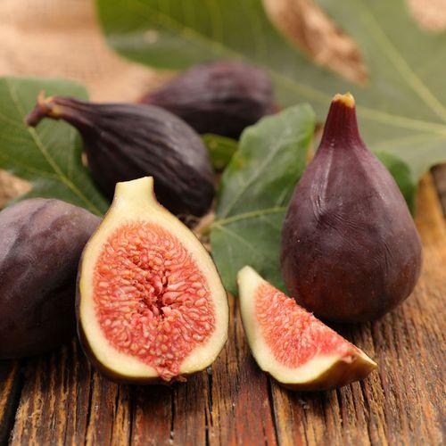 Violette de Bordeaux Fig