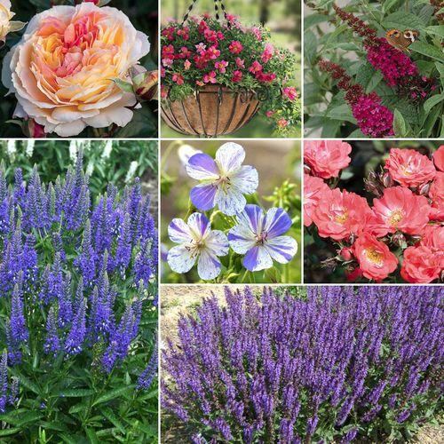 Summer Sunset Garden Collection