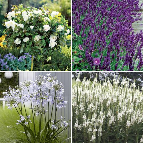 In Love With Lavender Landscape Collection