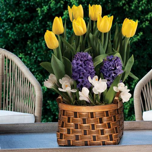 Vibrant Wish Bulb Garden