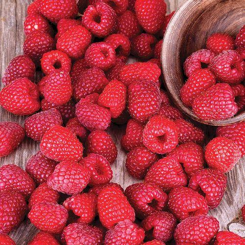Raspberry 'Latham'