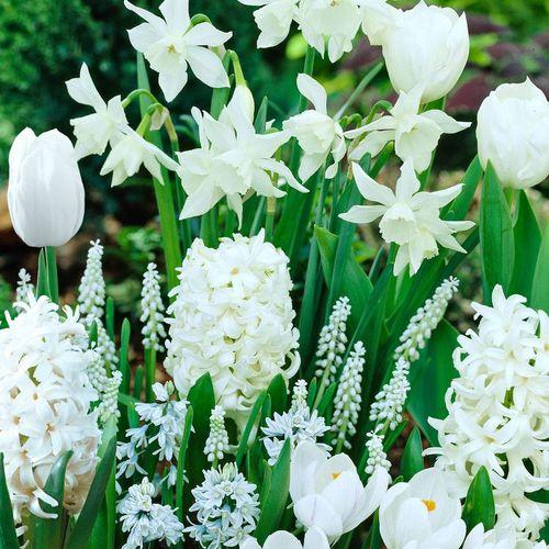 White Garden Collection
