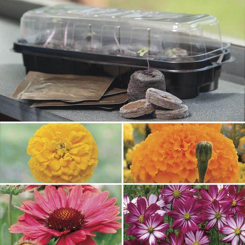 Windowsill Flower Starter Kit