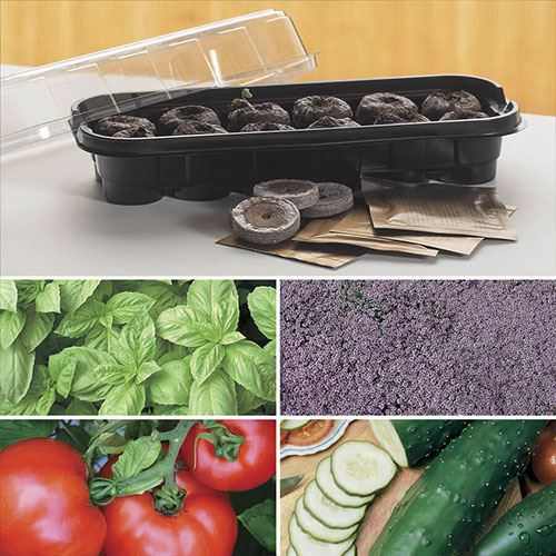 Windowsill Herb & Veggie Starter Kit