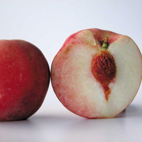 White Delight #2 Peach Tree