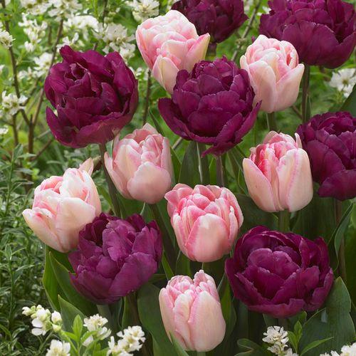 Tulip Ballroom Blossoms Mix