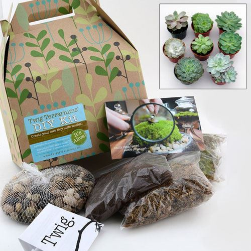 Do-it-Yourself Succulent Terrarium Kit with Seeds