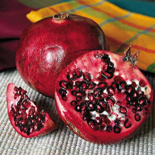 Favorite™ Pomegranate