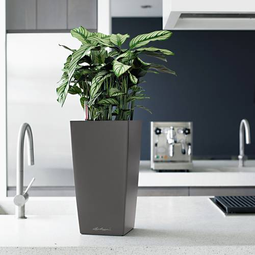 Lechuza Charcoal All in One Cubico Self Watering Planter
