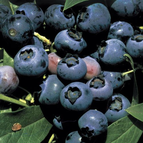 Blueberry O'Neal