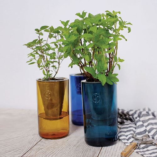 Tumbler Planter Kits