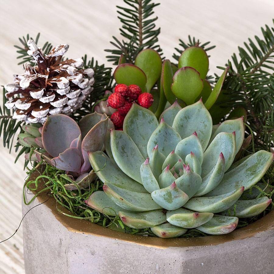 Season Greetings Succulent Garden