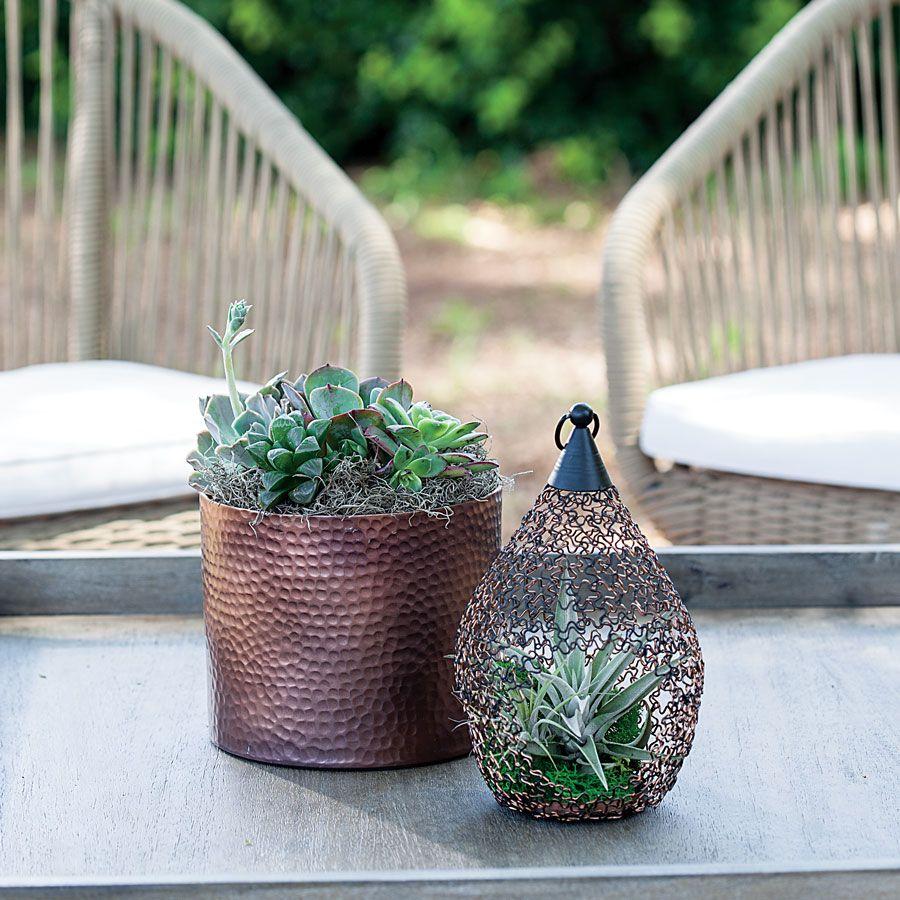 Succulents in Decorative Teardrop