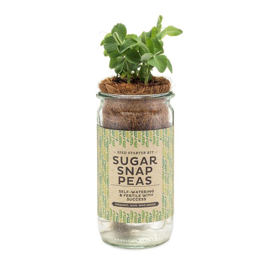 Kitchen Seed Starter Kit
