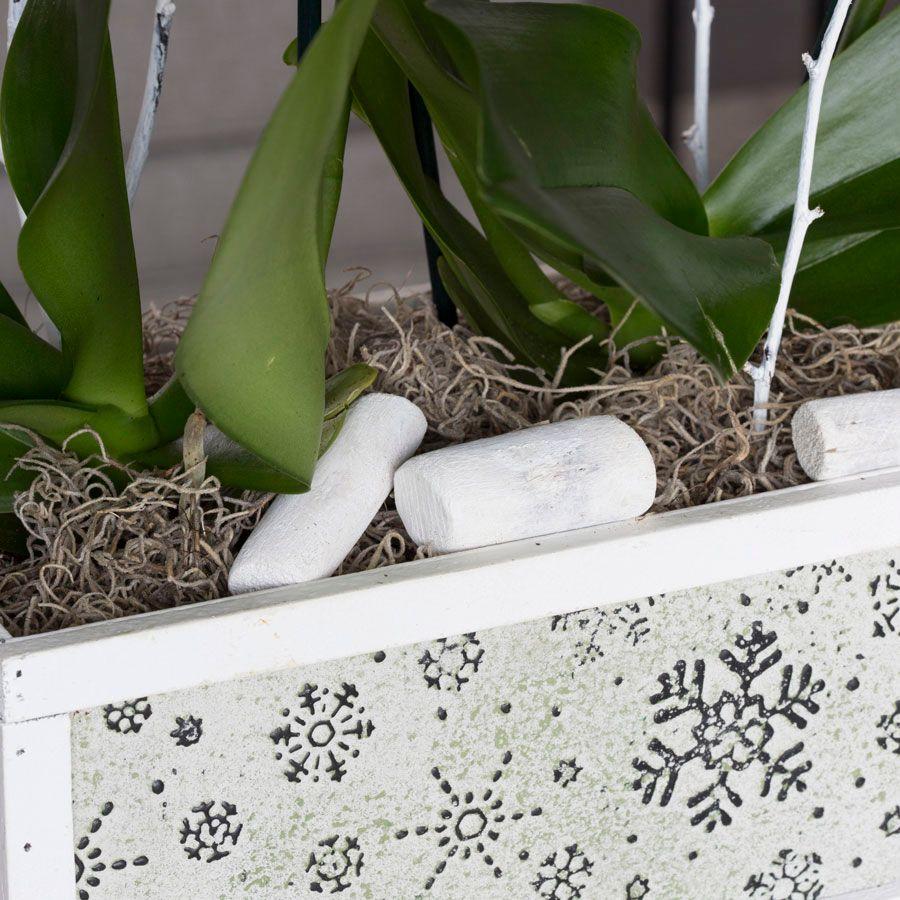 Snowfallen Orchids