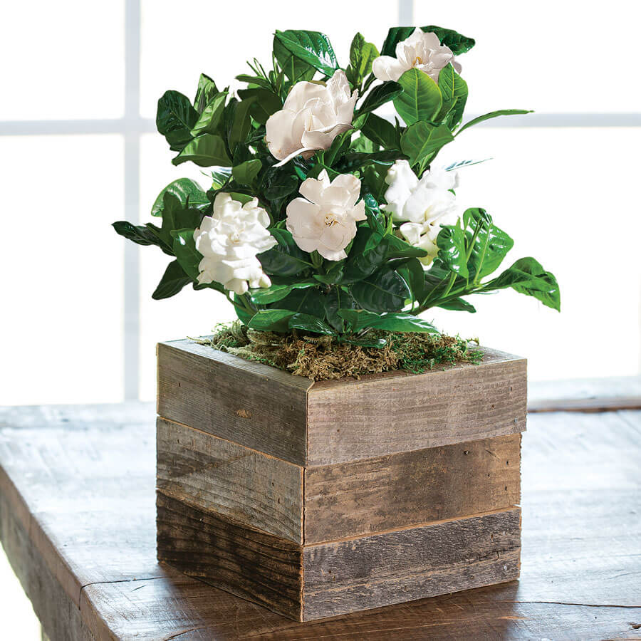 Gardenia in Reclaimed Wood Image