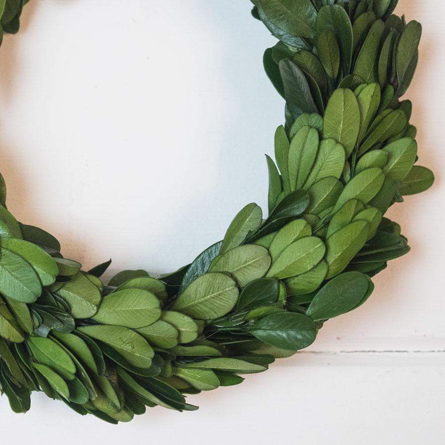Mini Preserved Boxwood Wreaths