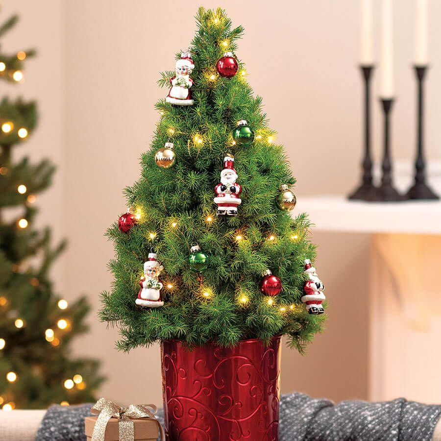 Celebrations by Radko Christmas Tree Image