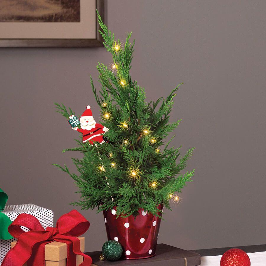 Mini Noel Tree Image