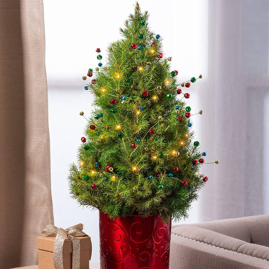 Holiday Jingle Tree Image