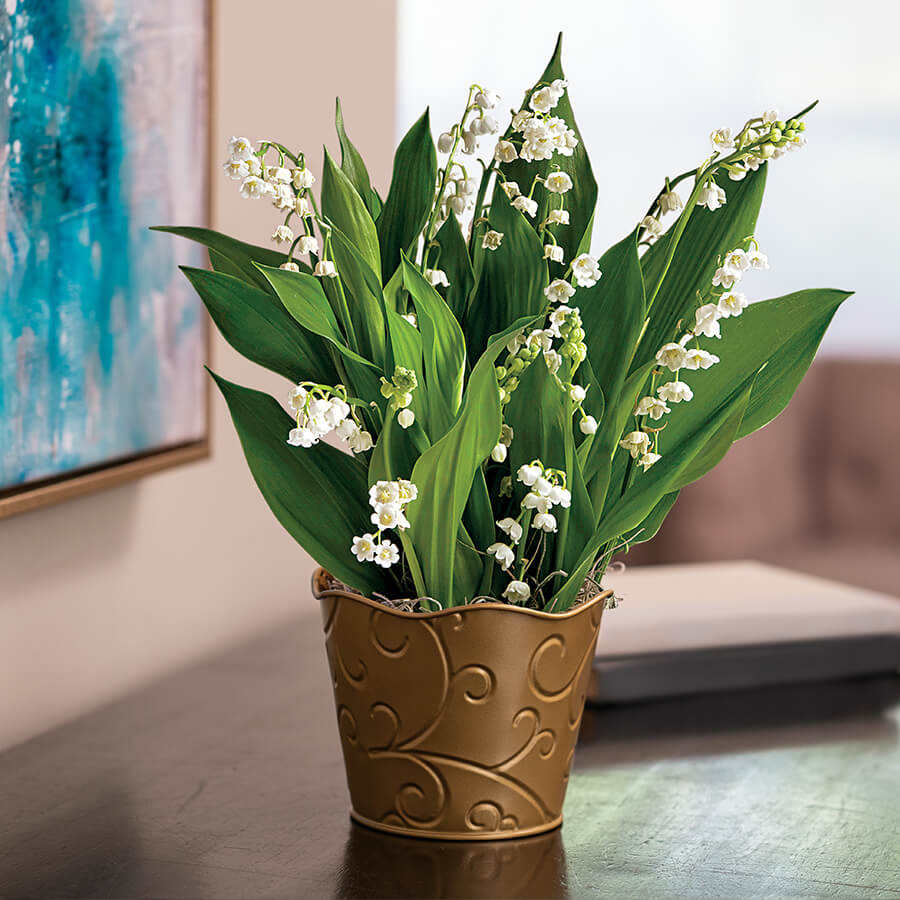 Joyful Lily of the Valley Image