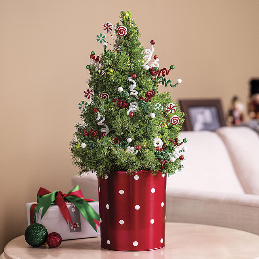 Peppermint Twist Tree Image
