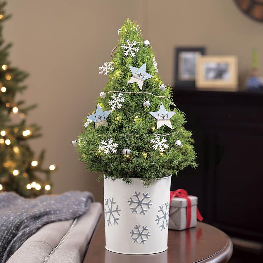 Warm Winter Wishes Tree Image