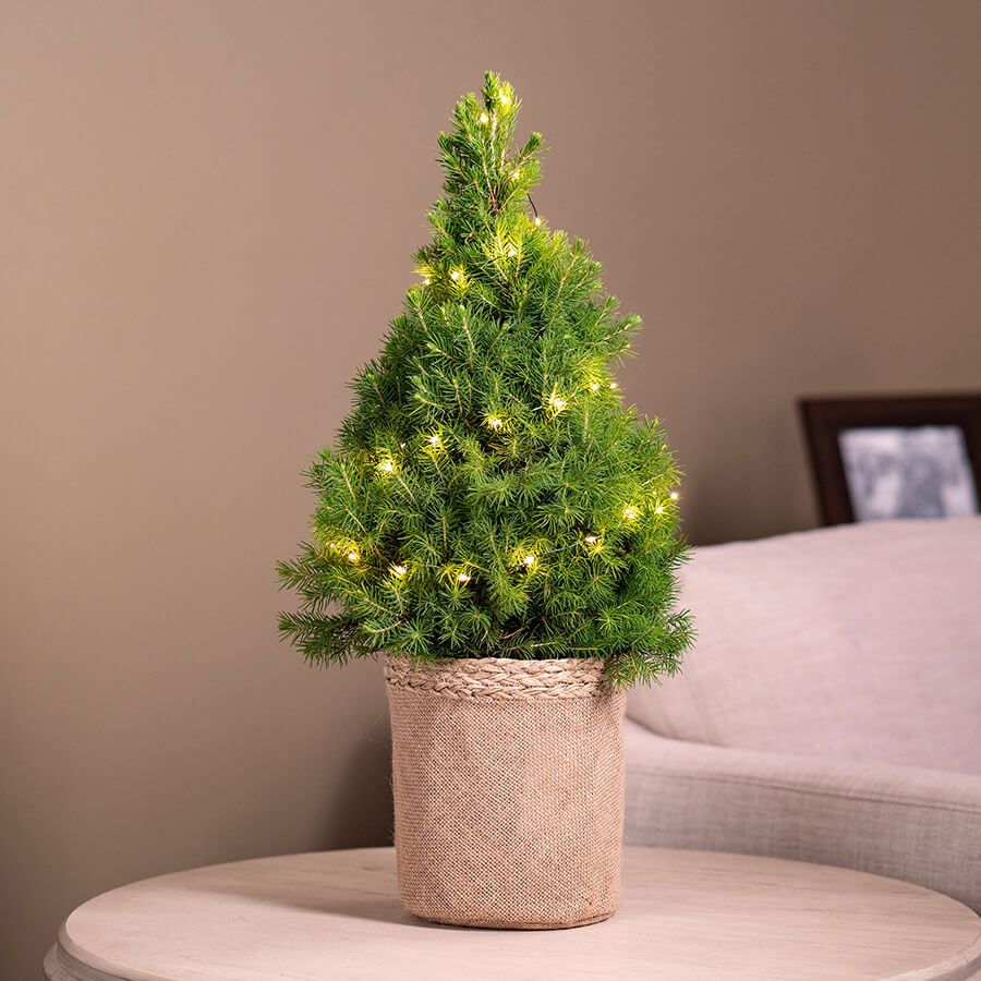 DIY Tree Image