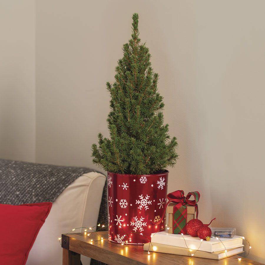 Holiday Spruce It Up Tree Image