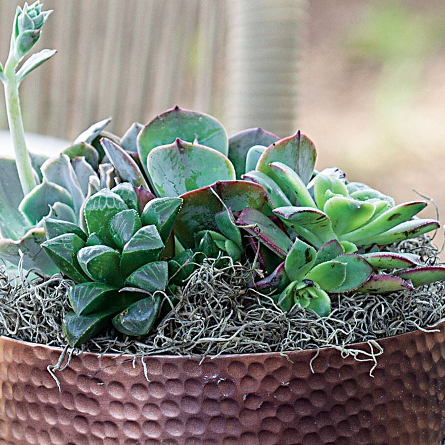 Antique Copper Succulent Garden