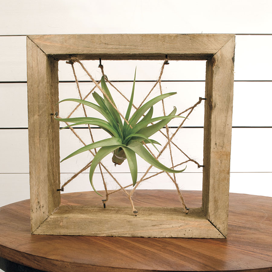 ToTilly Floating Air Plant For Sale At Jackson And Perkins